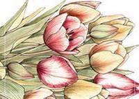 """Почтовая открытка """"Тюльпаны"""""""
