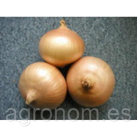 Семена лука Августа 1 кг Semo