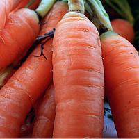 Семена моркови Ярана F1 150 грамм Semo