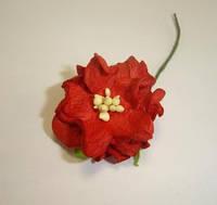 Цветок гордении красный