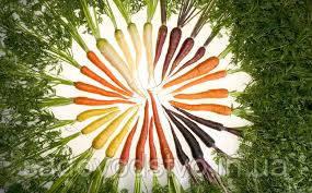Морковь  радуга