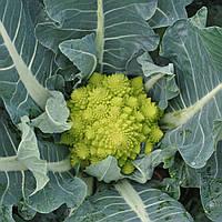 ДЖИТАНО F1  - семена капусты брокколи, CLAUSE 1000 семян