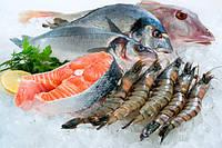 Холодильная камера для рыбы, фото 1