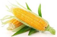 Кукуруза Кітчен Сід( Kitchen Seed