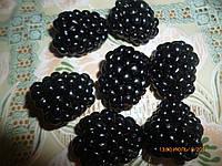 Саженцы  ежевики  Полар, фото 1