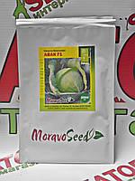 Капуста белокочанная Авак F1, 2500 семян Moravoseeds (Моравосид), Чехия