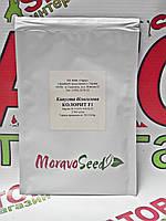 Капуста белокочанная Колорит F1, 2500 семян Moravoseeds (Моравосид), Чехия