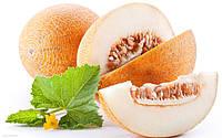 Семена дыни для фермеров в банках и проф. пакетах