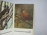 Рахманов А.И. Справочная книга по охране и разведению птиц (б/у)., фото 6