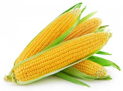 Семена сахарной кукурузы для фермеров
