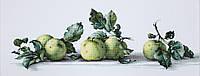 B2259 Натюрморт с яблоками