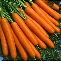 Семена моркови Йолана F1 150 грамм Semo