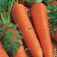 Семена моркови Каротина 50 грамм Semo