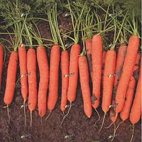 Семена моркови Йитка F1 1 кг Semo