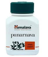 Пунарнава, Гималая / Punarnava, Himalaya / 60 caps от отеков
