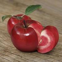 Яблоня Эра красномясая