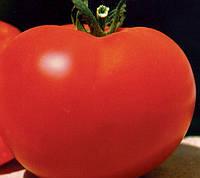 БАГІРА F1 - насіння томату детермінантного, 5 грам, CLAUSE, фото 1
