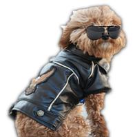 Кожаная куртка для собак в стиле Harley-Davidson. Одежда для собак.