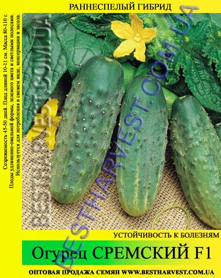 Семена огуреца Сремский F1 5 кг, раннеспелый гибрид
