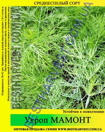 Семена укропа «Мамонт» 25 кг (мешок), фото 2