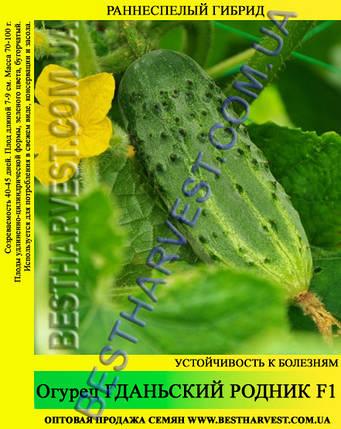 Семена огурца Гданьский Родник F1 5кг (мешок), раннеспелый гибрид, фото 2