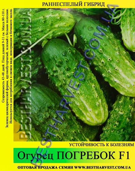 Семена огурца Погребок F1 5кг (мешок), раннеспелый гибрид