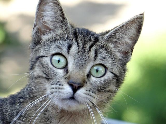 Витамины для собак и кошек Canina Petvital Energy