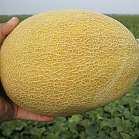 КРЕДО F1 - семена дыни, CLAUSE 1000 семян