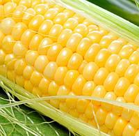 ЛЕНДМАРК F1  - семена сладкой кукурузы, CLAUSE 1 кг