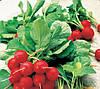 ДЖОЛЛІ - насіння редиски, 500 грам, CLAUSE
