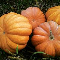 МУСКАТ де ПРОВАНС  - семена тыквы, CLAUSE 100 грамм