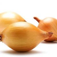 Голландский озимый лук-севок