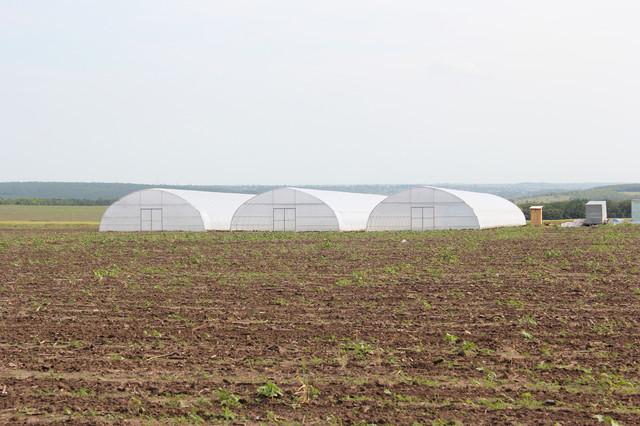 теплицы фермерские промышленные