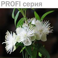 Эфирное масло Мирта Myrtus communis 5 мл