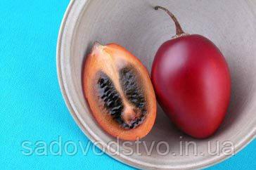Томатное дерево (Тамарилло)