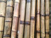 Бамбуковые стволы толстостенные, грузинские.