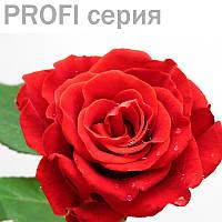Эфирные масла Роза Rosa gallica 1мл