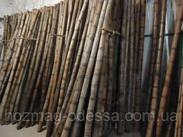 Бамбуковый ствол 7-8 см. Длина 3м.Уценка!