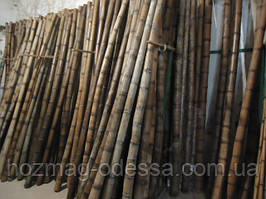 Бамбуковый ствол 9-10 см. Длина 3м.