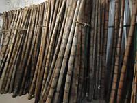 Бамбуковый ствол 12-14 см. Длина 3м.