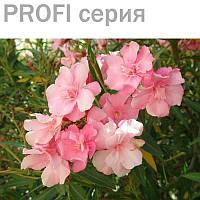 Эфирное масло розового дерева Aniba rosaeodora 5мл