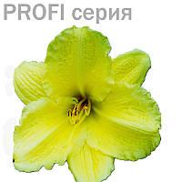 Эфирные масла Цитронелла Cymbopogon winterianus  5мл