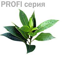 Эфирные масла Чайное дерево Melaleuca alternifolia 5мл