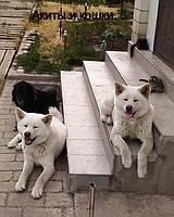 Гостиница для собак Одесса
