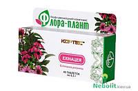 «Флора-плант Эхинацея» БАД  природный иммуностимулятор