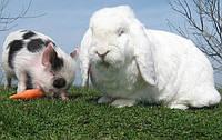 Стимуляторы роста для кроликов