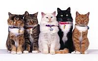 День домашних кошек