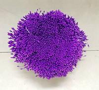 Тычинки на нитке фиолетовые