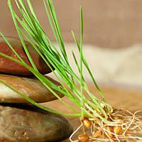 Косметическое масло Wheat Germ из пророщеной пшеницы