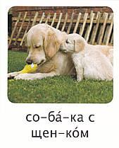 Развивающие карточки на русском языке (аналог карточек Домана)